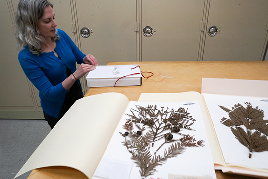Archivist works with plant specimens